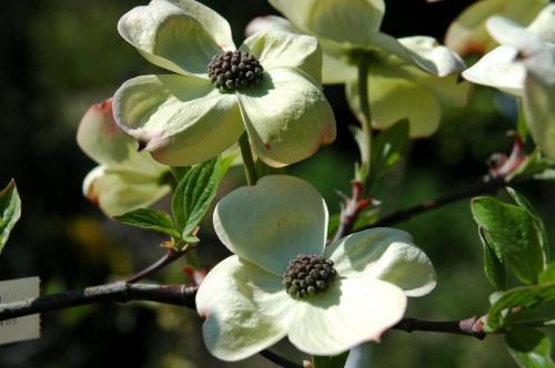 bloemen 2 of 9