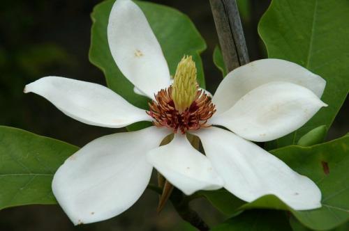 bloemen 4 of 9
