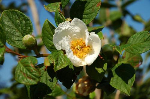 bloemen 7 of 9