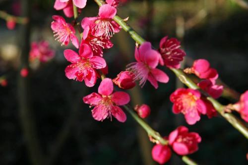 bloemen 8 of 9